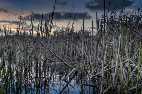 pond_at_dusk